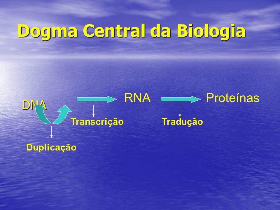 Dogma Central da Biologia DNA RNAProteínas TraduçãoTranscrição Duplicação