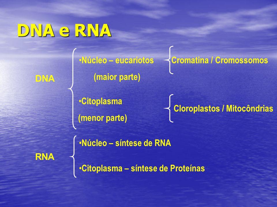 DNA e RNA DNA RNA Núcleo – eucariotos (maior parte) Cromatina / Cromossomos Citoplasma (menor parte) Cloroplastos / Mitocôndrias Núcleo – síntese de R