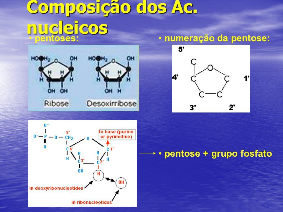 Composição dos Ác. nucleicos pentoses: numeração da pentose: pentose + grupo fosfato