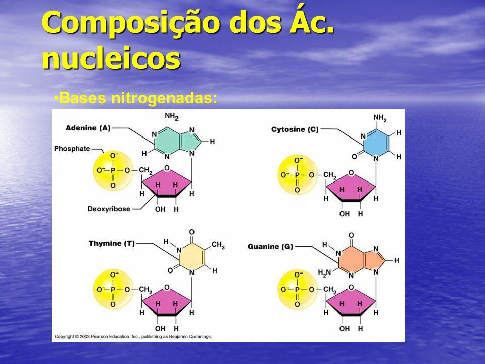 Composição dos Ác. nucleicos Bases nitrogenadas: