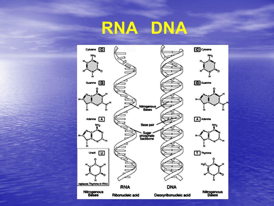 RNA DNA