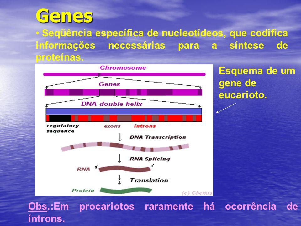Genes Seqüência específica de nucleotídeos, que codifica informações necessárias para a síntese de proteínas. Esquema de um gene de eucarioto. Obs.:Em