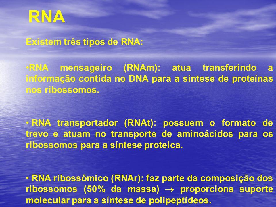 RNA Existem três tipos de RNA: RNA mensageiro (RNAm): atua transferindo a informação contida no DNA para a síntese de proteínas nos ribossomos. RNA tr