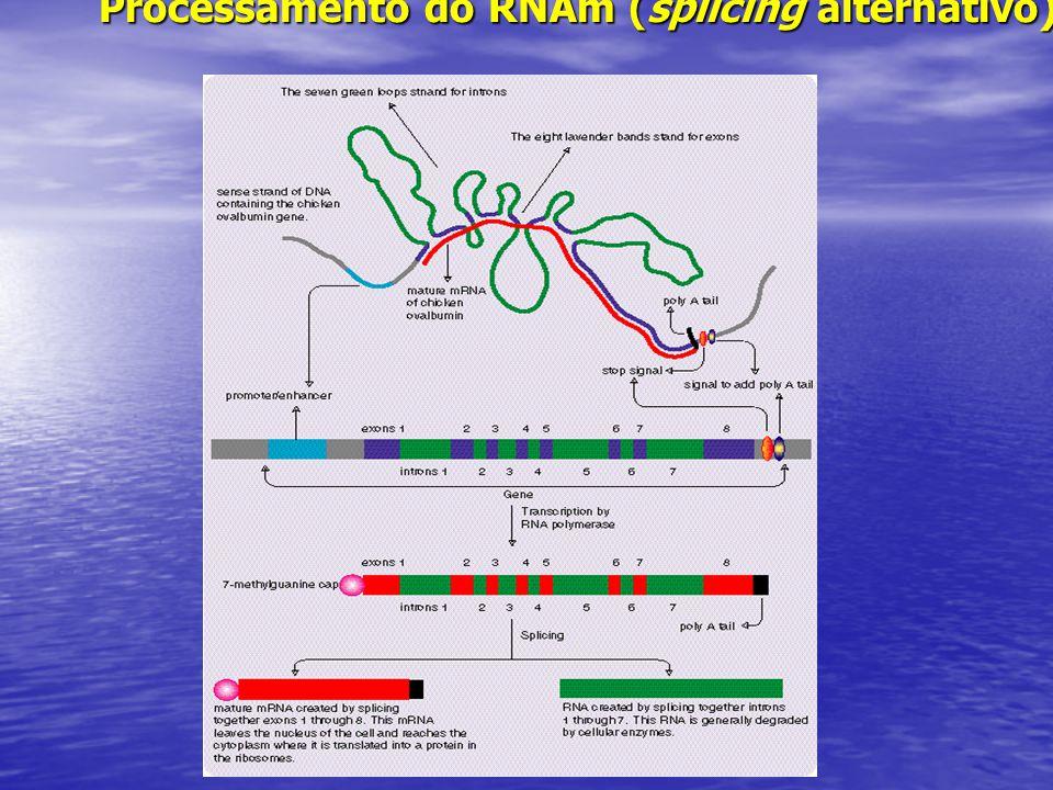 Processamento do RNAm (splicing alternativo )
