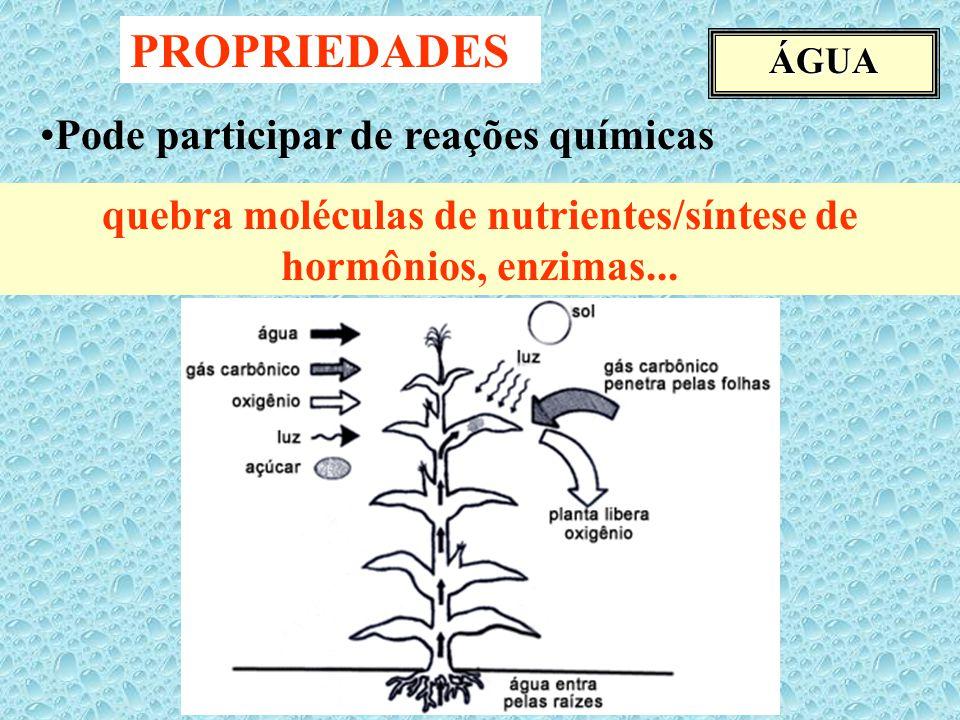 ÁGUA PROPRIEDADES Pode participar de reações químicas quebra moléculas de nutrientes/síntese de hormônios, enzimas...