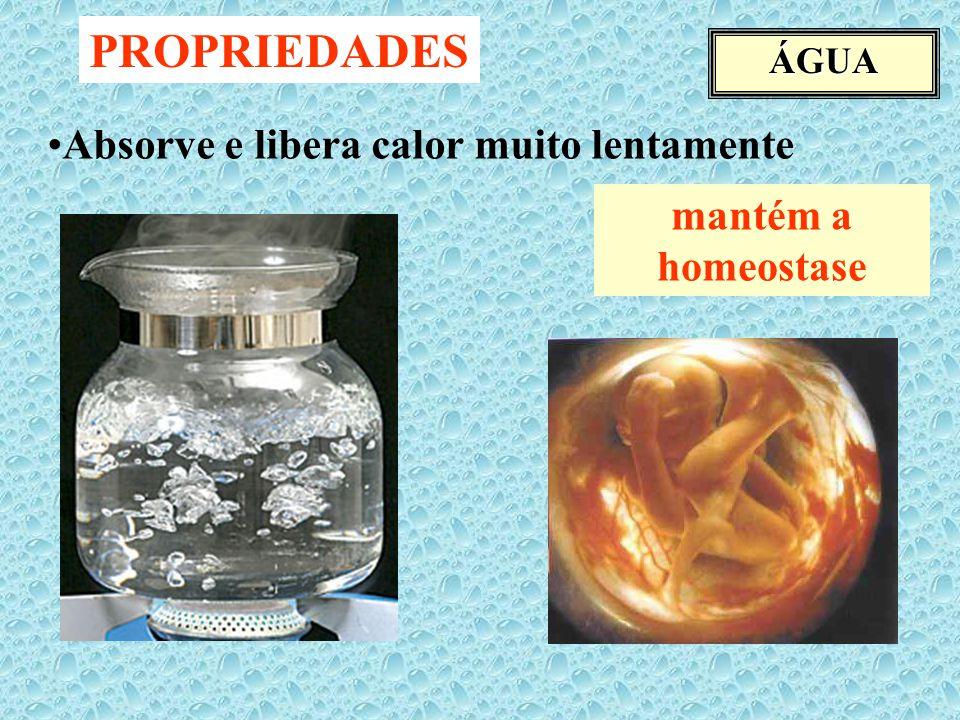 ÁGUA PROPRIEDADES Absorve e libera calor muito lentamente mantém a homeostase