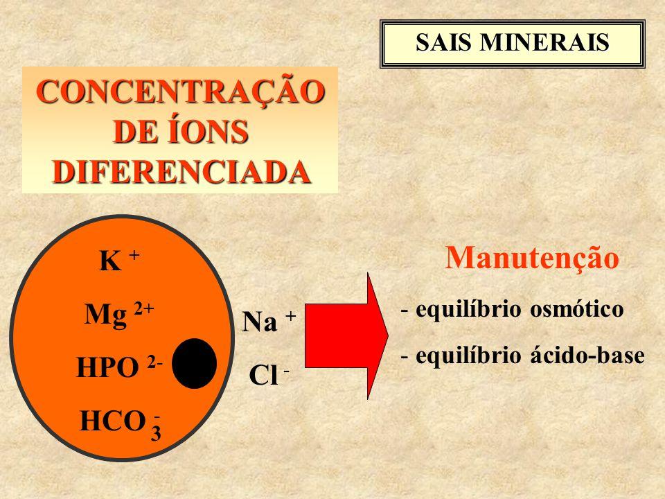 SAIS MINERAIS CONCENTRAÇÃO DE ÍONS DIFERENCIADA K + Mg 2+ HPO 2- HCO - 3 Na + Cl - Manutenção - equilíbrio osmótico - equilíbrio ácido-base