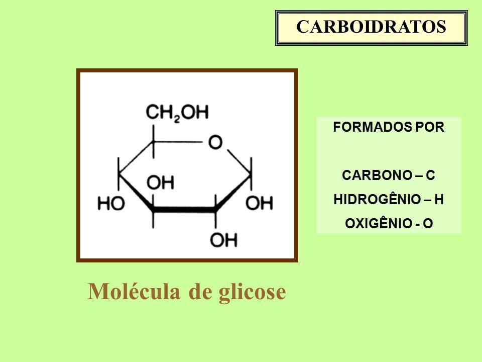 Molécula de glicose CARBOIDRATOS FORMADOS POR CARBONO – C HIDROGÊNIO – H OXIGÊNIO - O