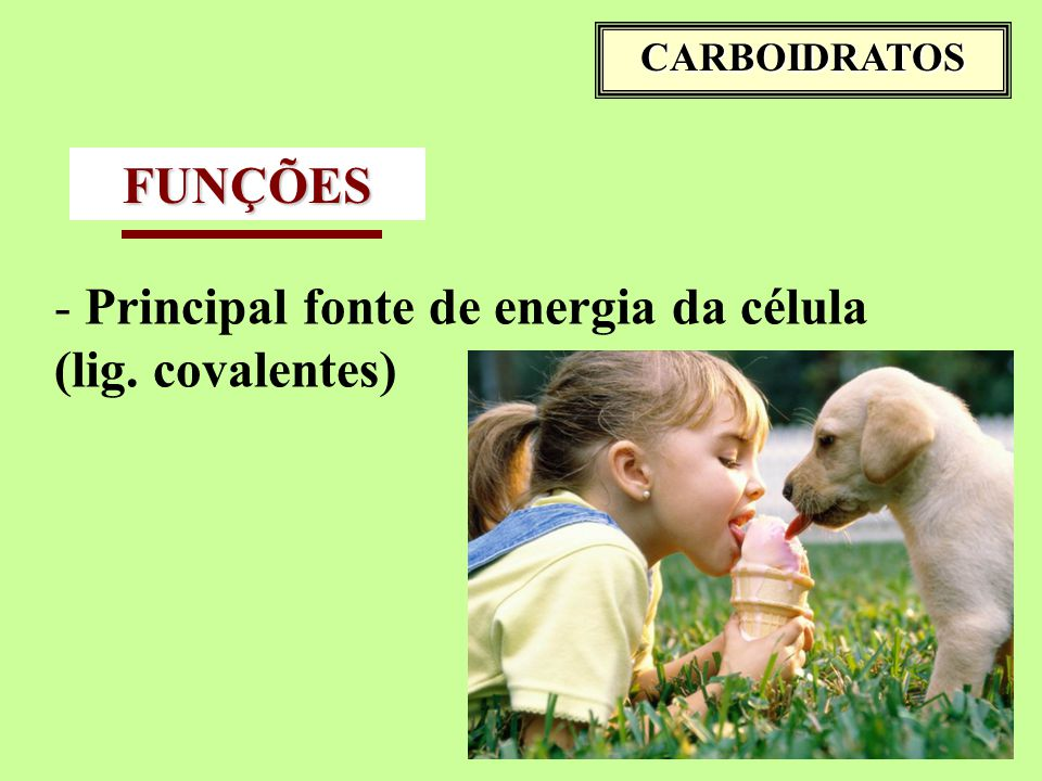CARBOIDRATOS FUNÇÕES - Principal fonte de energia da célula (lig. covalentes)