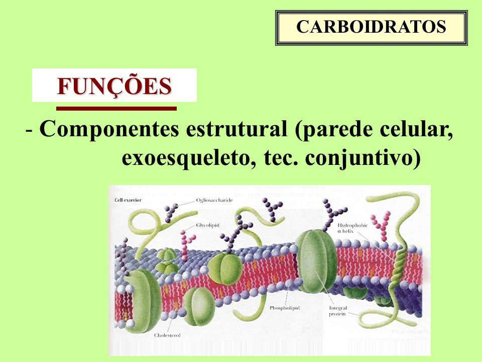 CARBOIDRATOS FUNÇÕES - Componentes estrutural (parede celular, exoesqueleto, tec. conjuntivo)
