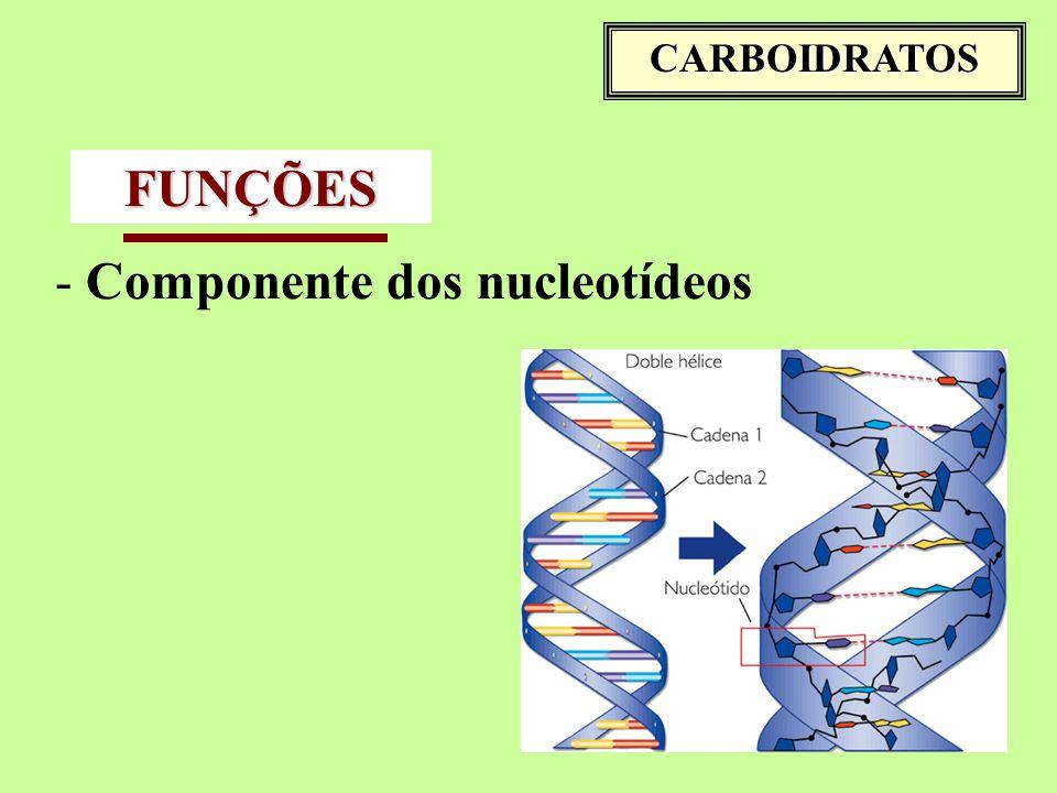 CARBOIDRATOS FUNÇÕES - Componente dos nucleotídeos