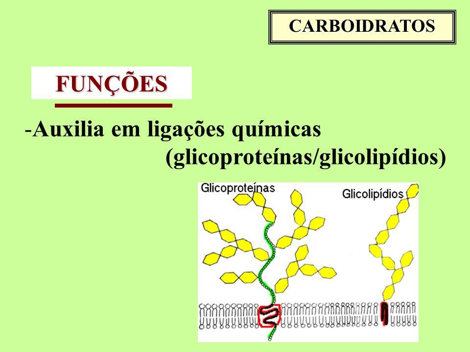 CARBOIDRATOS FUNÇÕES -Auxilia em ligações químicas (glicoproteínas/glicolipídios)