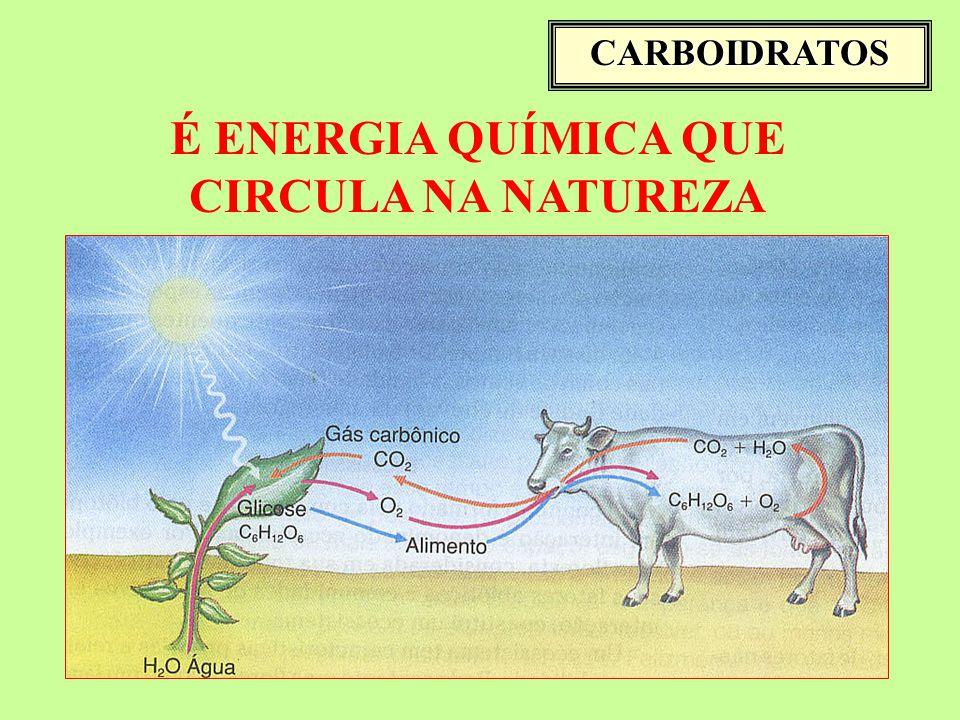 É ENERGIA QUÍMICA QUE CIRCULA NA NATUREZA CARBOIDRATOS
