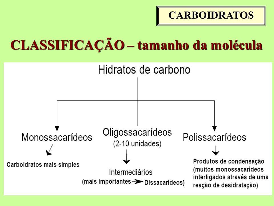CARBOIDRATOS CLASSIFICAÇÃO – tamanho da molécula