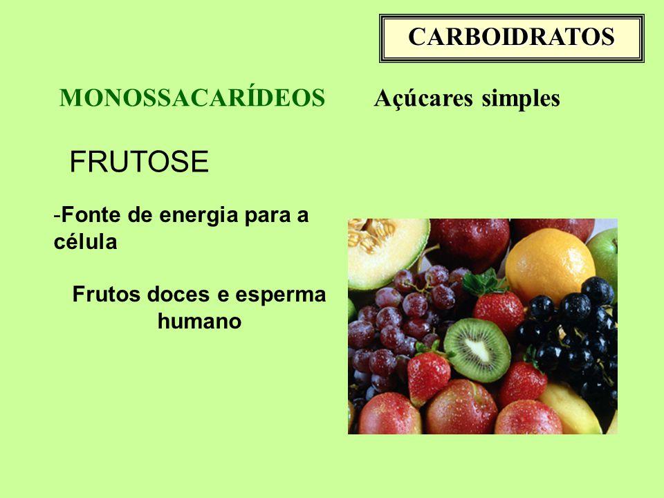 CARBOIDRATOS MONOSSACARÍDEOSAçúcares simples FRUTOSE -Fonte de energia para a célula Frutos doces e esperma humano