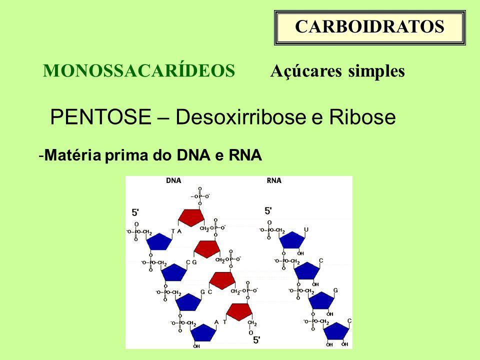 CARBOIDRATOS MONOSSACARÍDEOSAçúcares simples PENTOSE – Desoxirribose e Ribose -Matéria prima do DNA e RNA