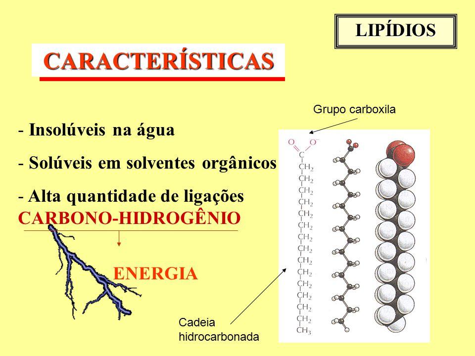 LIPÍDIOS CARACTERÍSTICAS - Insolúveis na água - Solúveis em solventes orgânicos - Alta quantidade de ligações CARBONO-HIDROGÊNIO ENERGIA Cadeia hidrocarbonada Grupo carboxila