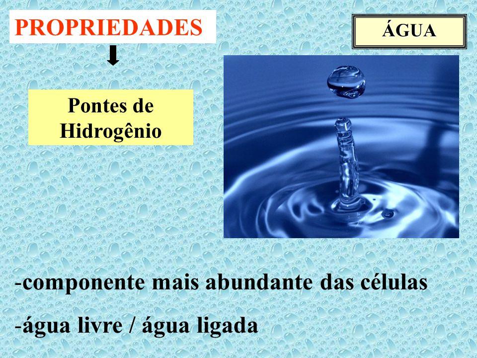 ÁGUA -componente mais abundante das células -água livre / água ligada PROPRIEDADES Pontes de Hidrogênio