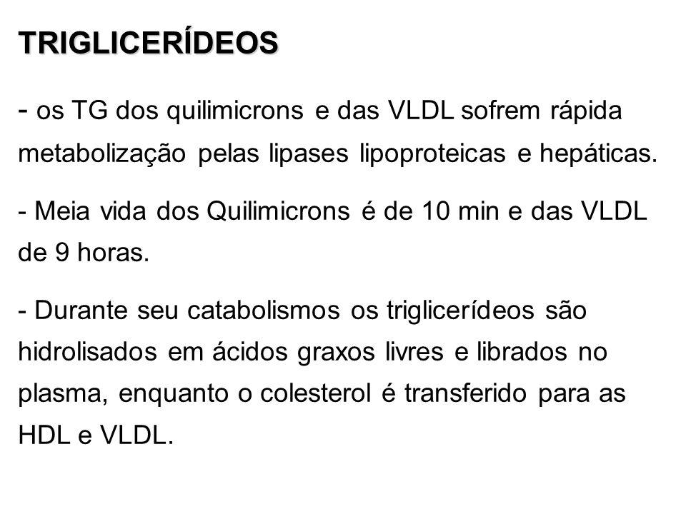 TRIGLICERÍDEOS - os TG dos quilimicrons e das VLDL sofrem rápida metabolização pelas lipases lipoproteicas e hepáticas. - Meia vida dos Quilimicrons é