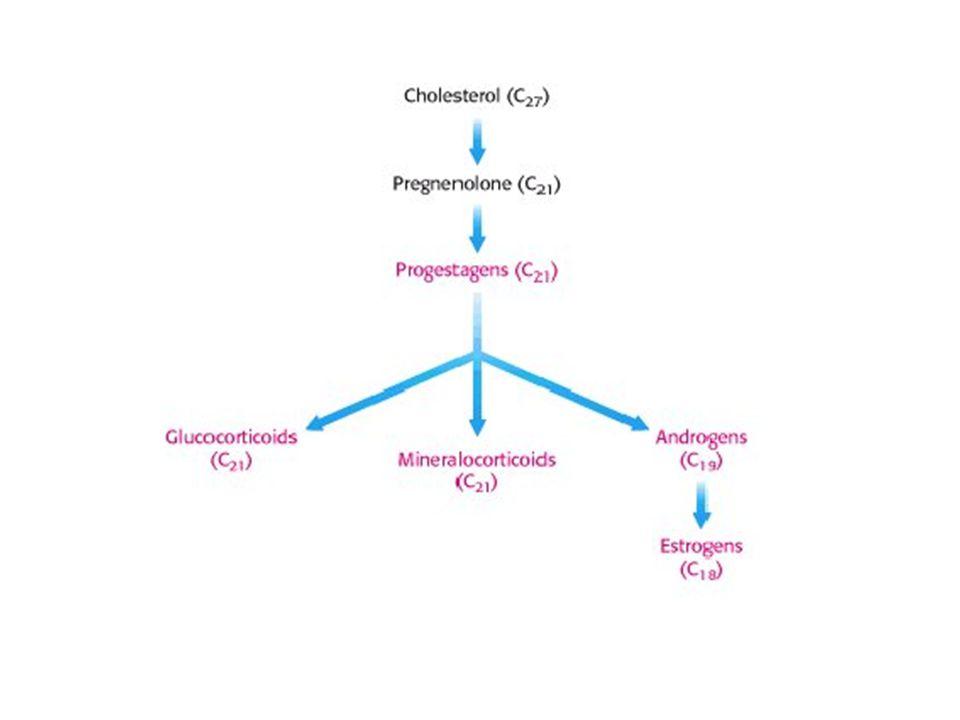 HDL (lipoproteína de alta densidade) -O HDL (high density lipoproteins) leva de volta ao fígado o colesterol esterificado que não foi utilizado pelas membranas das células do nosso corpo.