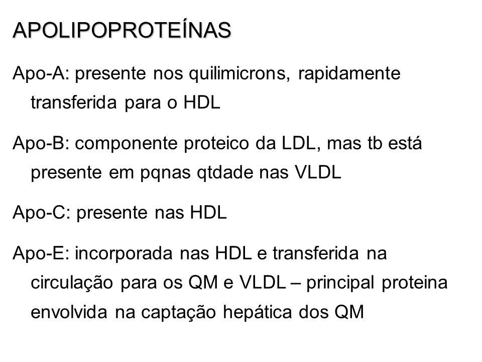 APOLIPOPROTEÍNAS Apo-A: presente nos quilimicrons, rapidamente transferida para o HDL Apo-B: componente proteico da LDL, mas tb está presente em pqnas qtdade nas VLDL Apo-C: presente nas HDL Apo-E: incorporada nas HDL e transferida na circulação para os QM e VLDL – principal proteina envolvida na captação hepática dos QM