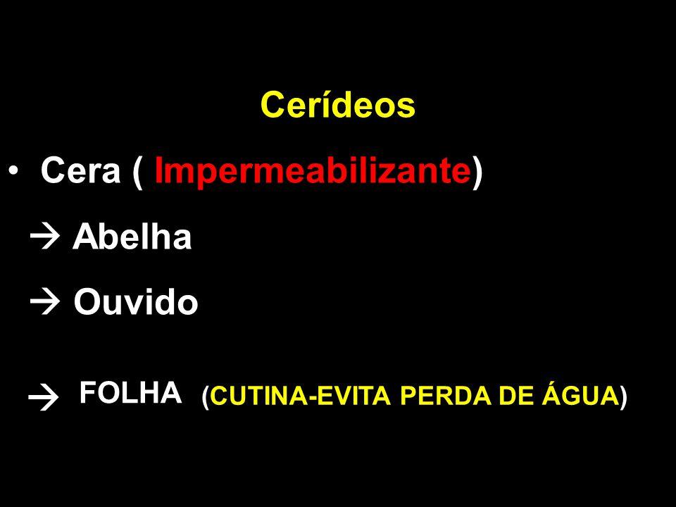 Cerídeos Cera ( Impermeabilizante)  Abelha  Ouvido  FOLHA (CUTINA-EVITA PERDA DE ÁGUA)