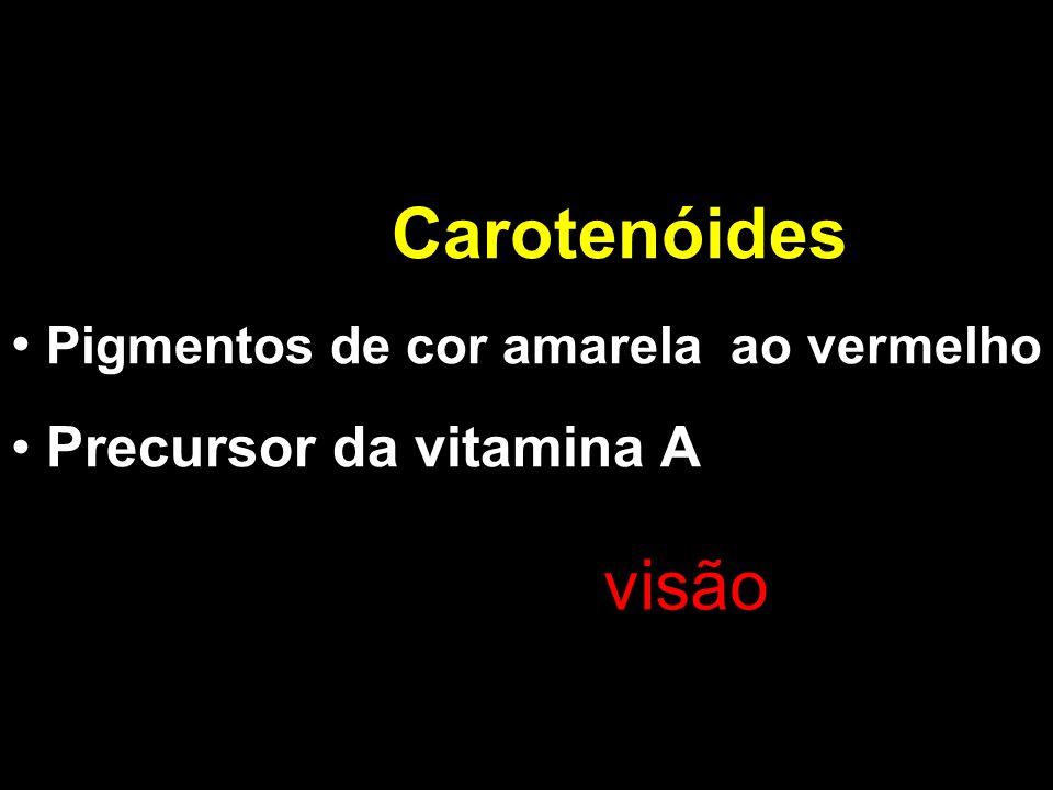 Carotenóides Pigmentos de cor amarela ao vermelho Precursor da vitamina A visão