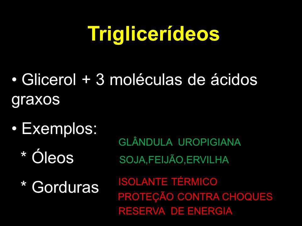 Triglicerídeos Glicerol + 3 moléculas de ácidos graxos Exemplos: * Óleos SOJA,FEIJÃO,ERVILHA * Gorduras ISOLANTE TÉRMICO PPROTEÇÃO CONTRA CHOQUES RESERVA DE ENERGIA GLÂNDULA UROPIGIANA