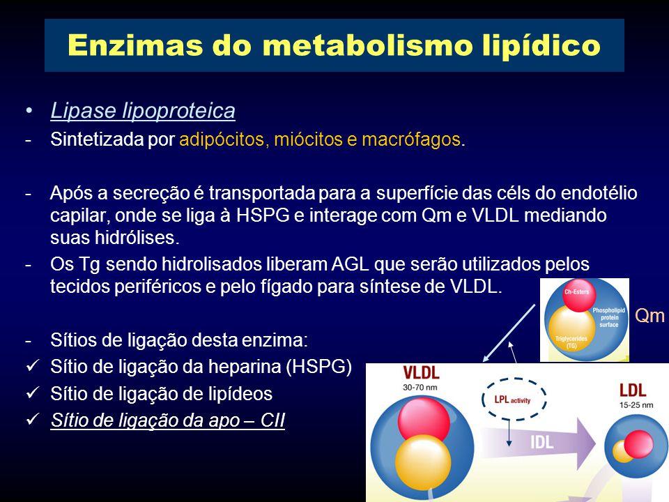 Lipase lipoproteica -Sintetizada por adipócitos, miócitos e macrófagos.
