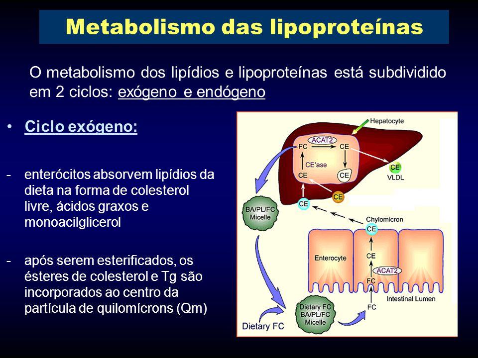 Ciclo exógeno: -enterócitos absorvem lipídios da dieta na forma de colesterol livre, ácidos graxos e monoacilglicerol -após serem esterificados, os ésteres de colesterol e Tg são incorporados ao centro da partícula de quilomícrons (Qm) O metabolismo dos lipídios e lipoproteínas está subdividido em 2 ciclos: exógeno e endógeno Metabolismo das lipoproteínas