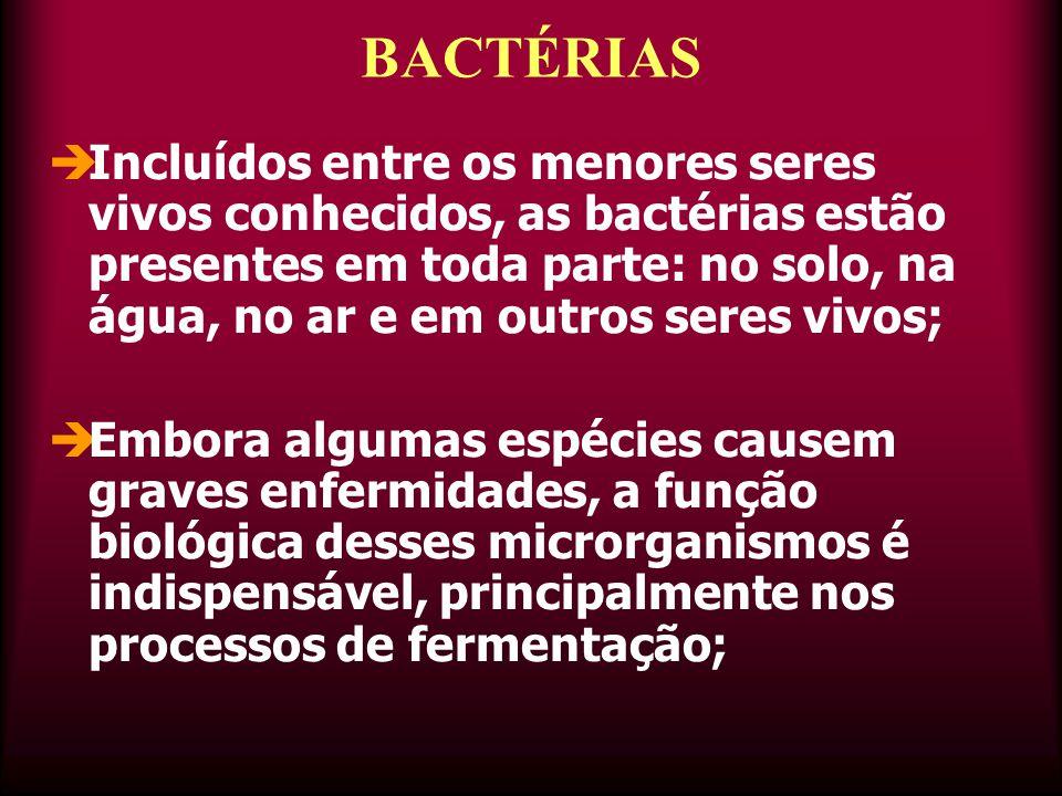  Incluídos entre os menores seres vivos conhecidos, as bactérias estão presentes em toda parte: no solo, na água, no ar e em outros seres vivos;  Embora algumas espécies causem graves enfermidades, a função biológica desses microrganismos é indispensável, principalmente nos processos de fermentação; BACTÉRIAS