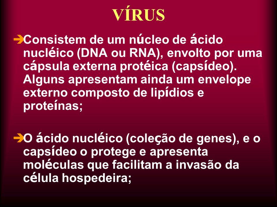  Consistem de um n ú cleo de á cido nucl é ico (DNA ou RNA), envolto por uma c á psula externa prot é ica (caps í deo). Alguns apresentam ainda um en