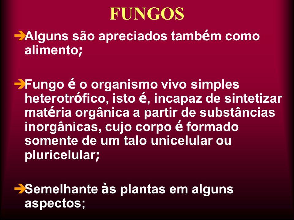  Alguns são apreciados tamb é m como alimento ;  Fungo é o organismo vivo simples heterotr ó fico, isto é, incapaz de sintetizar mat é ria orgânica a partir de substâncias inorgânicas, cujo corpo é formado somente de um talo unicelular ou pluricelular ;  Semelhante à s plantas em alguns aspectos; FUNGOS