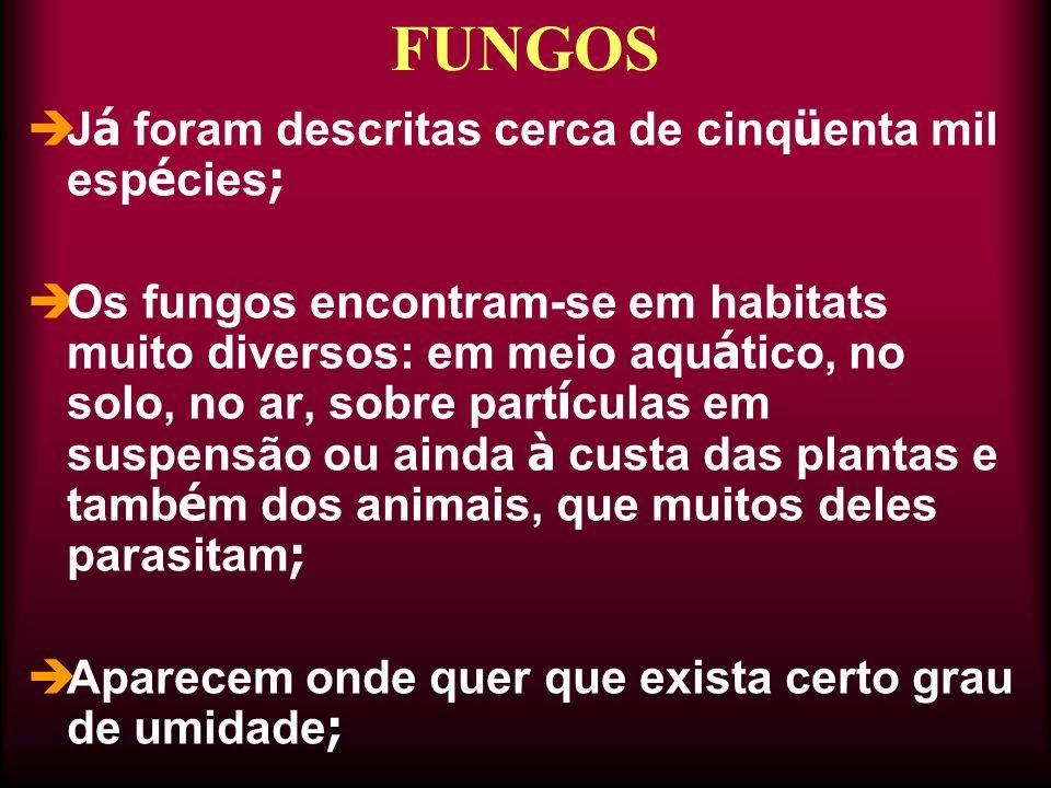  J á foram descritas cerca de cinq ü enta mil esp é cies ;  Os fungos encontram-se em habitats muito diversos: em meio aqu á tico, no solo, no ar, s