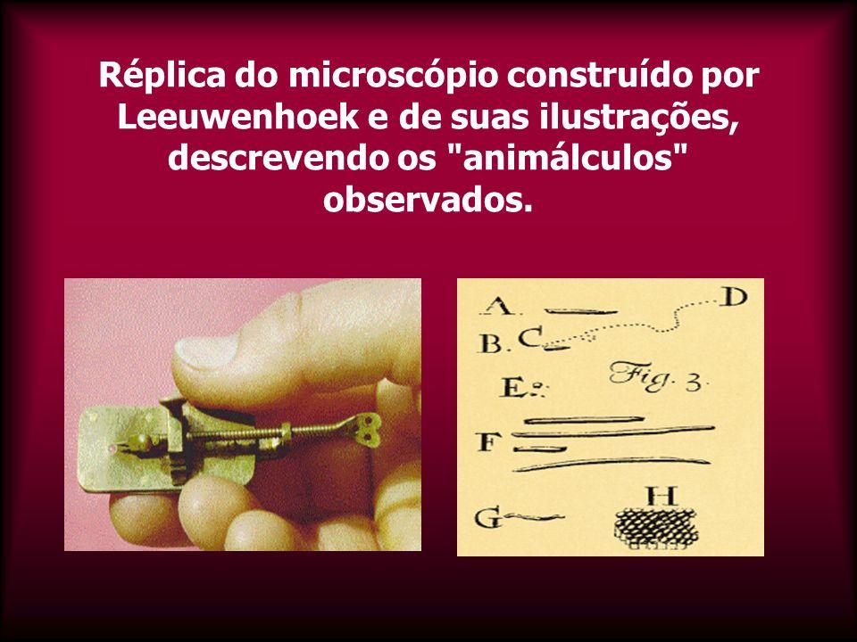 Réplica do microscópio construído por Leeuwenhoek e de suas ilustrações, descrevendo os animálculos observados.