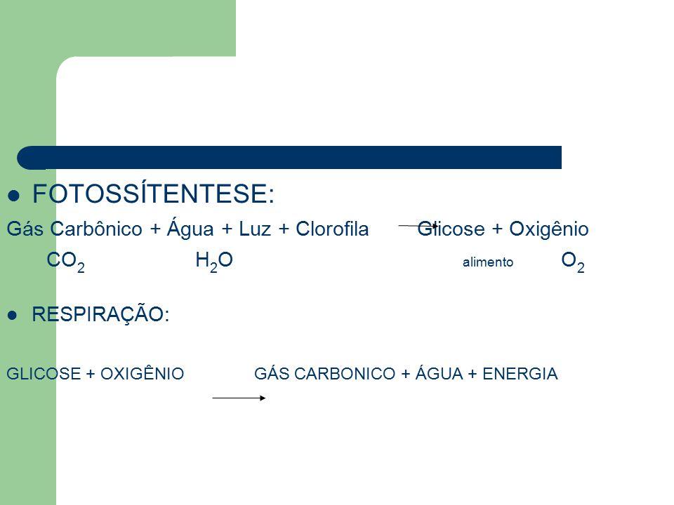 FOTOSSÍTENTESE: Gás Carbônico + Água + Luz + Clorofila Glicose + Oxigênio CO 2 H 2 O alimento O 2 RESPIRAÇÃO: GLICOSE + OXIGÊNIO GÁS CARBONICO + ÁGUA + ENERGIA