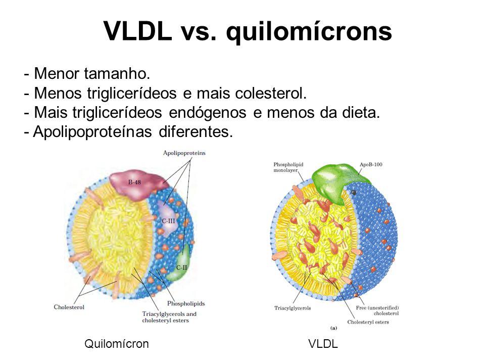 VLDL vs.quilomícrons - Menor tamanho. - Menos triglicerídeos e mais colesterol.