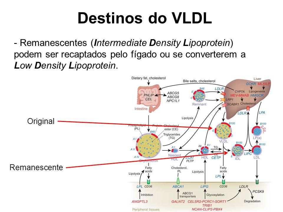Destinos do VLDL - Remanescentes (Intermediate Density Lipoprotein) podem ser recaptados pelo fígado ou se converterem a Low Density Lipoprotein.