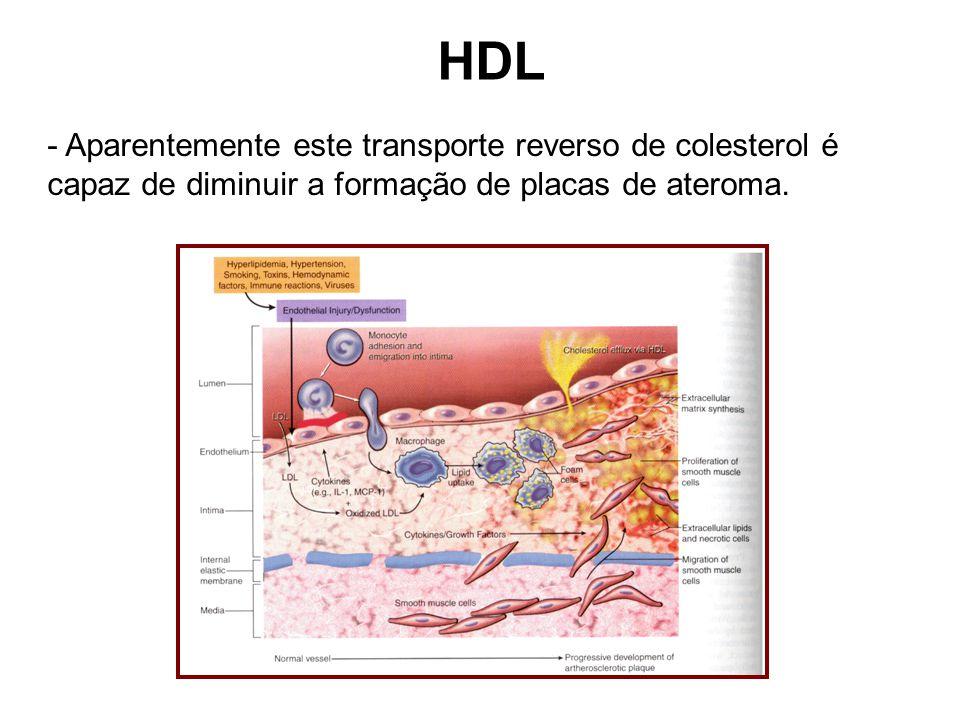 HDL - Aparentemente este transporte reverso de colesterol é capaz de diminuir a formação de placas de ateroma.