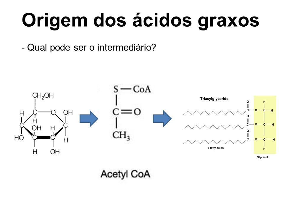 Origem dos ácidos graxos - Qual pode ser o intermediário?