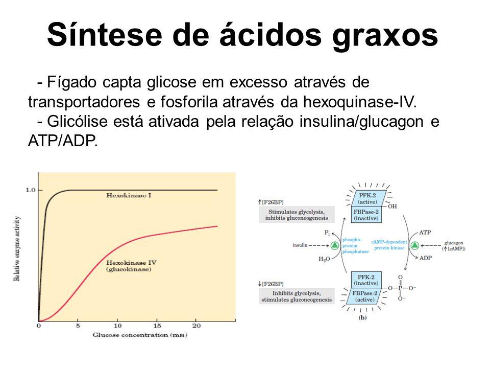 Síntese de ácidos graxos - Fígado capta glicose em excesso através de transportadores e fosforila através da hexoquinase-IV.