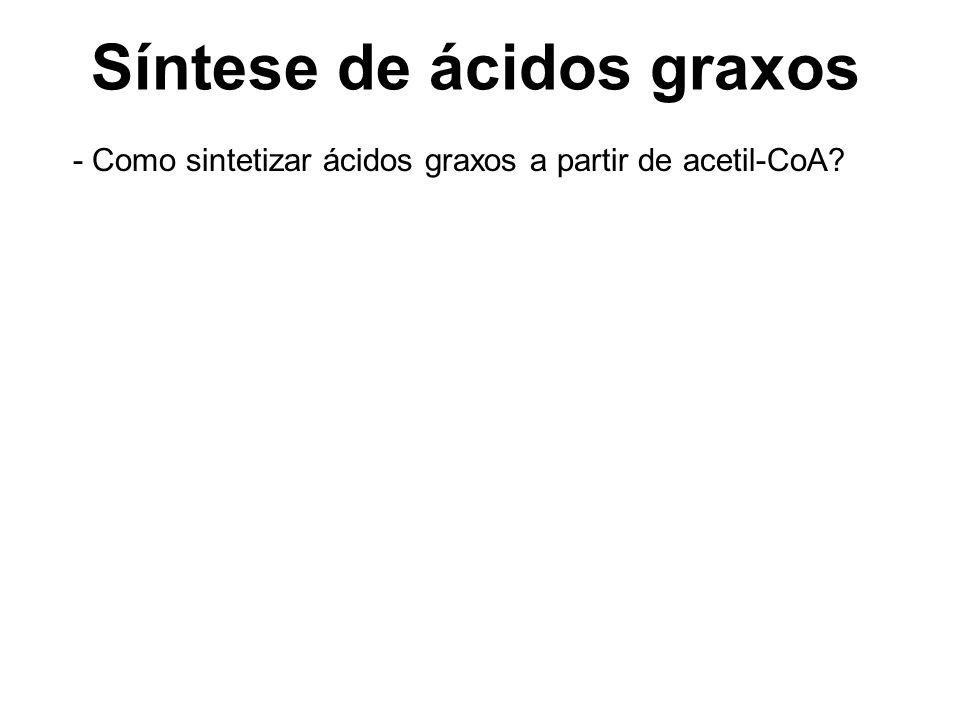 Síntese de ácidos graxos - Como sintetizar ácidos graxos a partir de acetil-CoA?