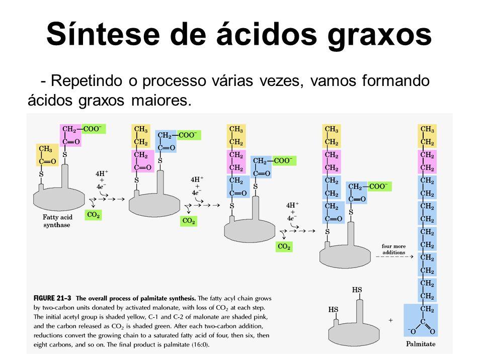 Síntese de ácidos graxos - Repetindo o processo várias vezes, vamos formando ácidos graxos maiores.