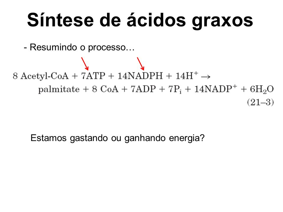 Síntese de ácidos graxos - Resumindo o processo… Estamos gastando ou ganhando energia?