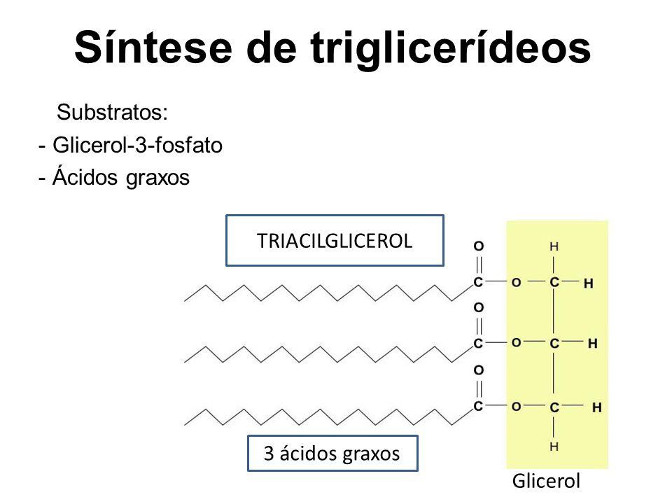 Síntese de triglicerídeos Substratos: - Glicerol-3-fosfato - Ácidos graxos TRIACILGLICEROL 3 ácidos graxos Glicerol