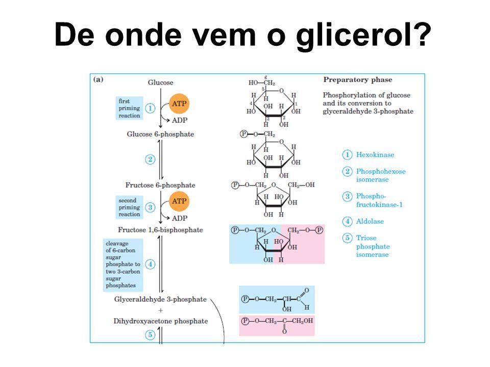 De onde vem o glicerol?
