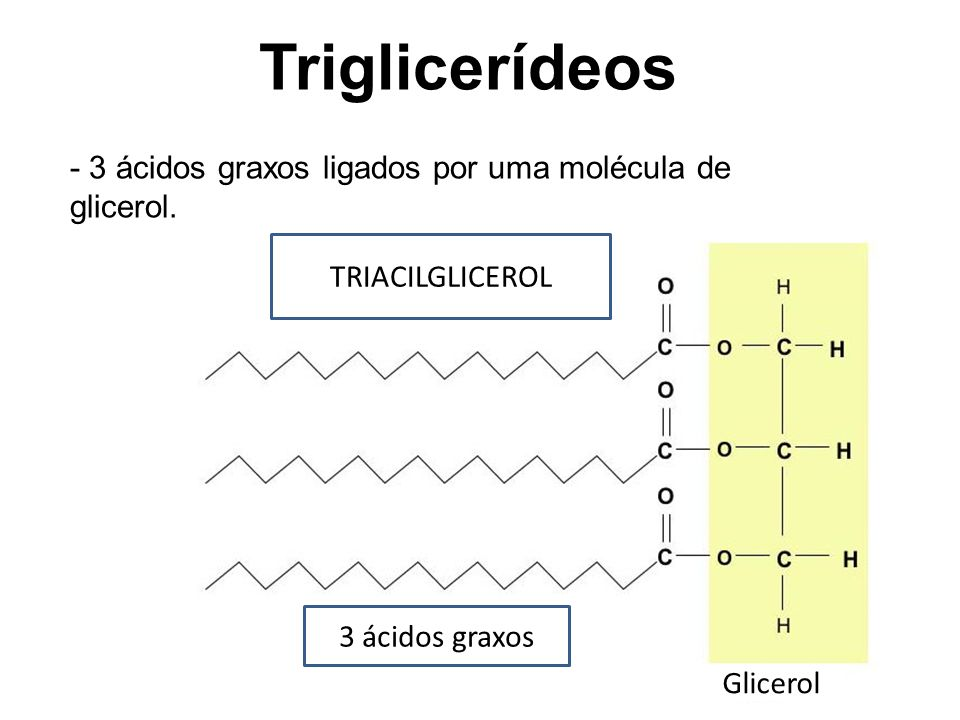 TRIACILGLICEROL 3 ácidos graxos Glicerol Triglicerídeos - 3 ácidos graxos ligados por uma molécula de glicerol.