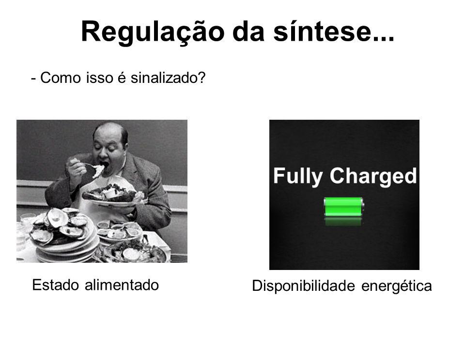 Regulação da síntese... - Como isso é sinalizado? Estado alimentado Disponibilidade energética