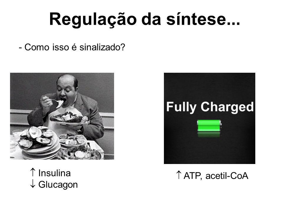 Regulação da síntese... - Como isso é sinalizado?  Insulina  Glucagon  ATP, acetil-CoA