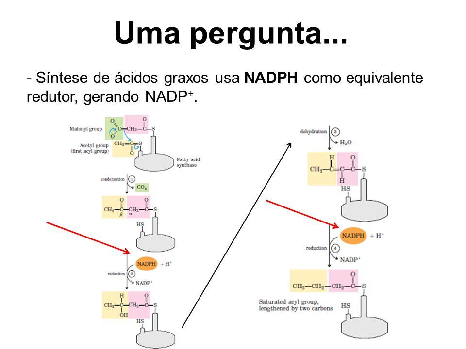 Uma pergunta... - Síntese de ácidos graxos usa NADPH como equivalente redutor, gerando NADP +.